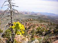 VegeMight Buttress, 5.8 R, 1,100 ft., Red Butte, Zion, UT