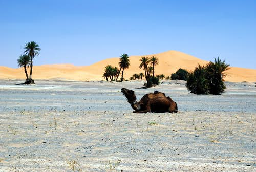 Landscape with camel