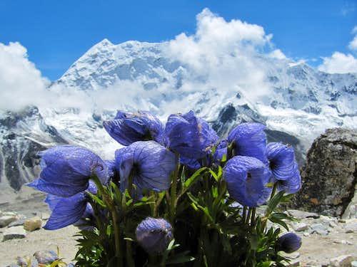 Beauty on the mountain