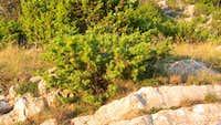 Promina-plants