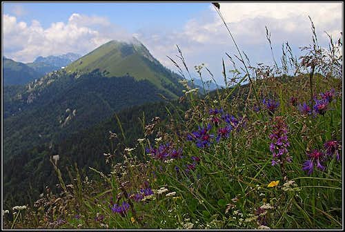 Golica from the W ridge of Struska / Baerentaler Kotschna