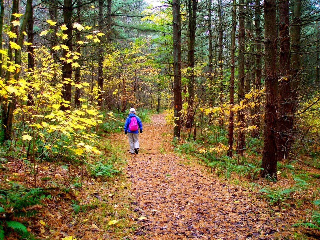 Bear Run Nature Reserve