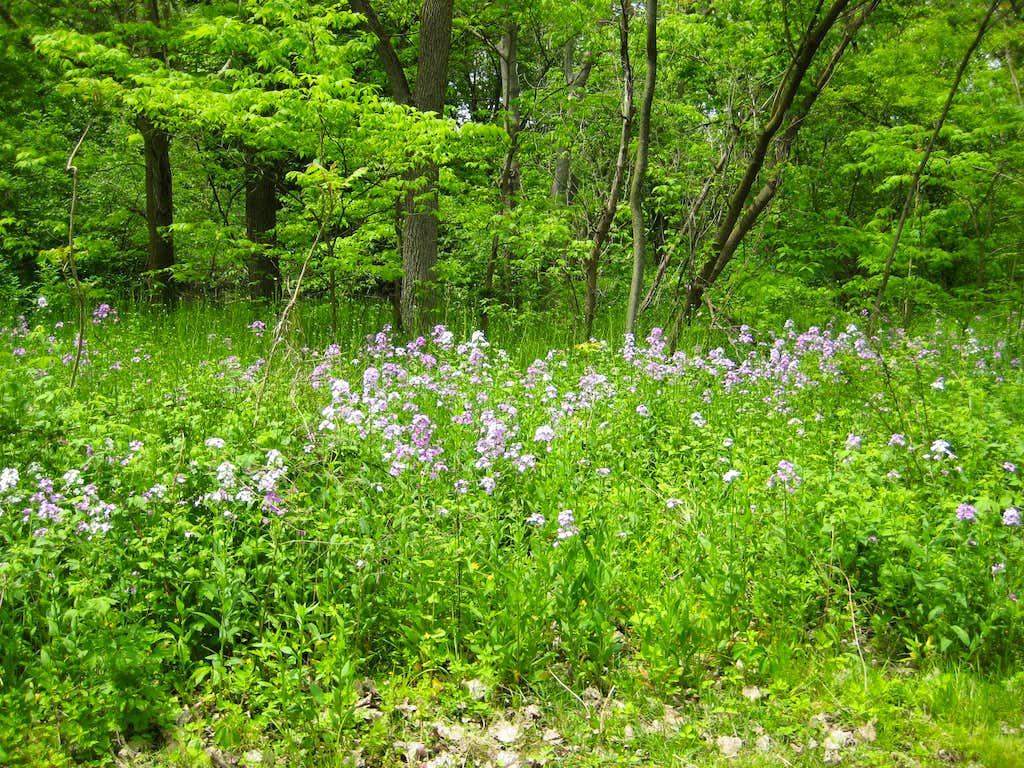 20100515 1241 flowers