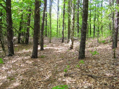 North Country Trail - M-89 to Kellogg Biological Station