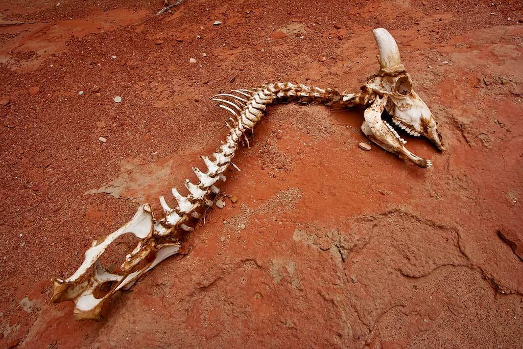 Mile 25.7 - Bleached Bones