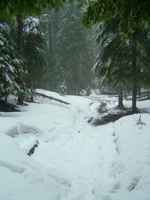 Minto Pass Trail