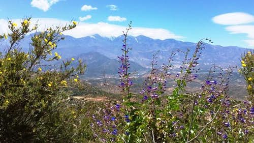 Wildflowers & San Gabriel Mountains