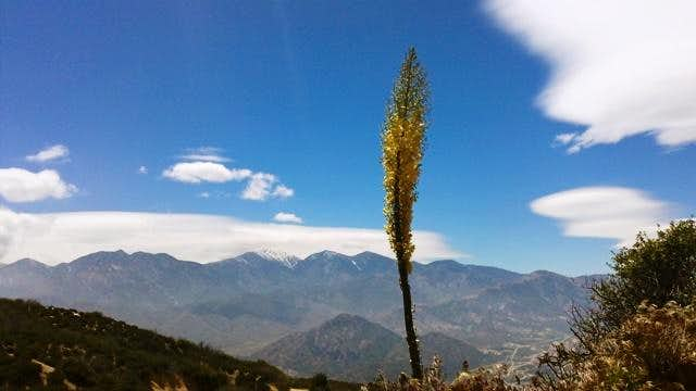 San Gabriel Mtns View with Yucca