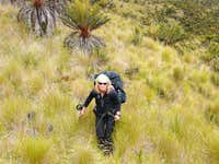 Walk through the Highlands of Papua