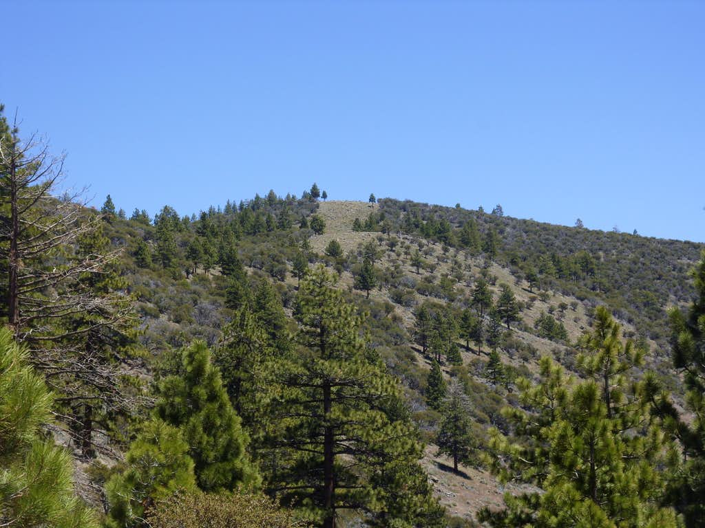 Dry Pond Peak from the Dry Pond Trail