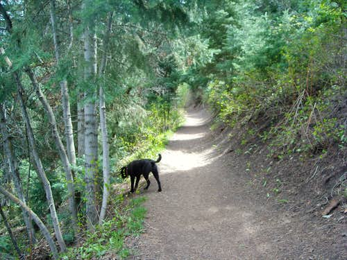 Cave Peak trail