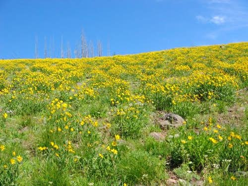 Wildflowers along the the...