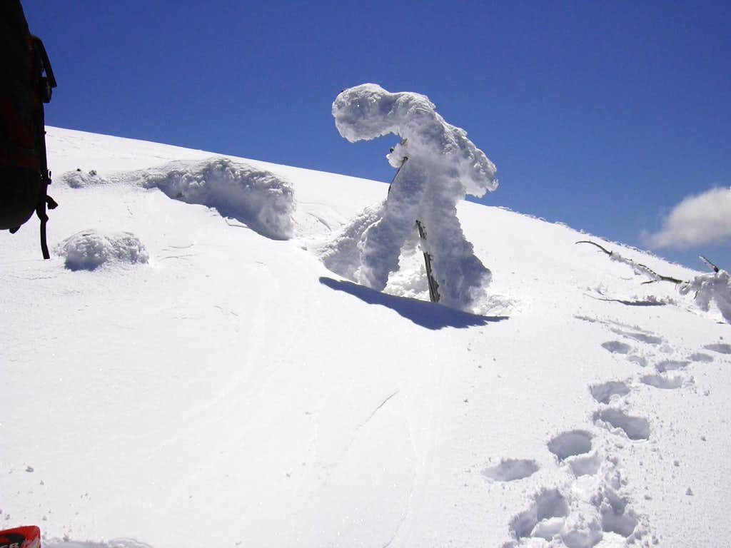 Frozen treeman