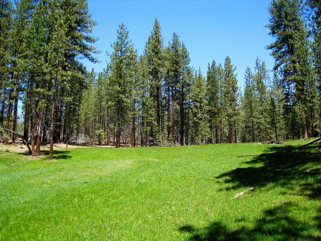 Meadow Near Deep Creek