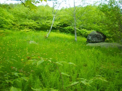 Appalachian Trail comes to life