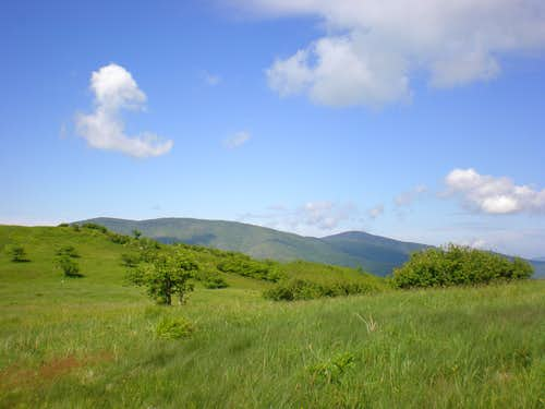 Looking to Grassy Ridge, Jane Bald, and Roan High Knob
