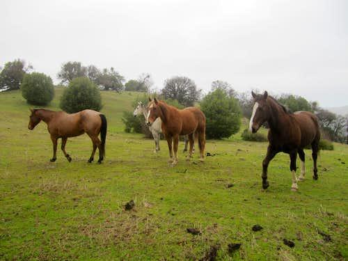 Horses upper Rocky Ridge
