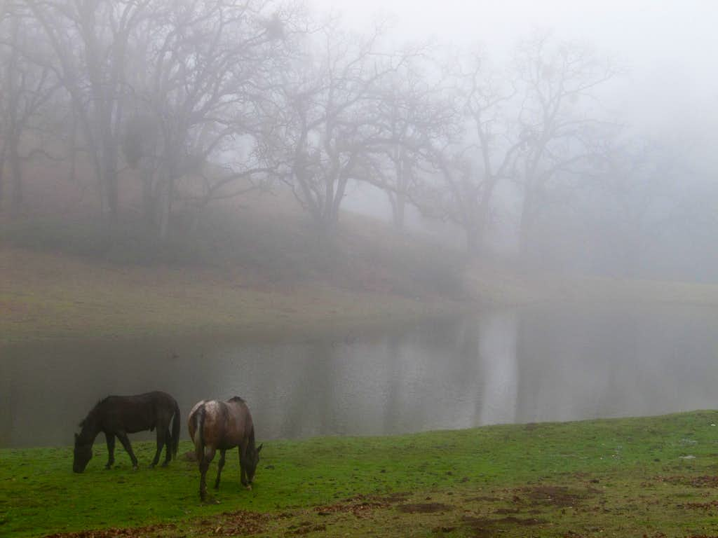 Horses in the mist near Rose Flat