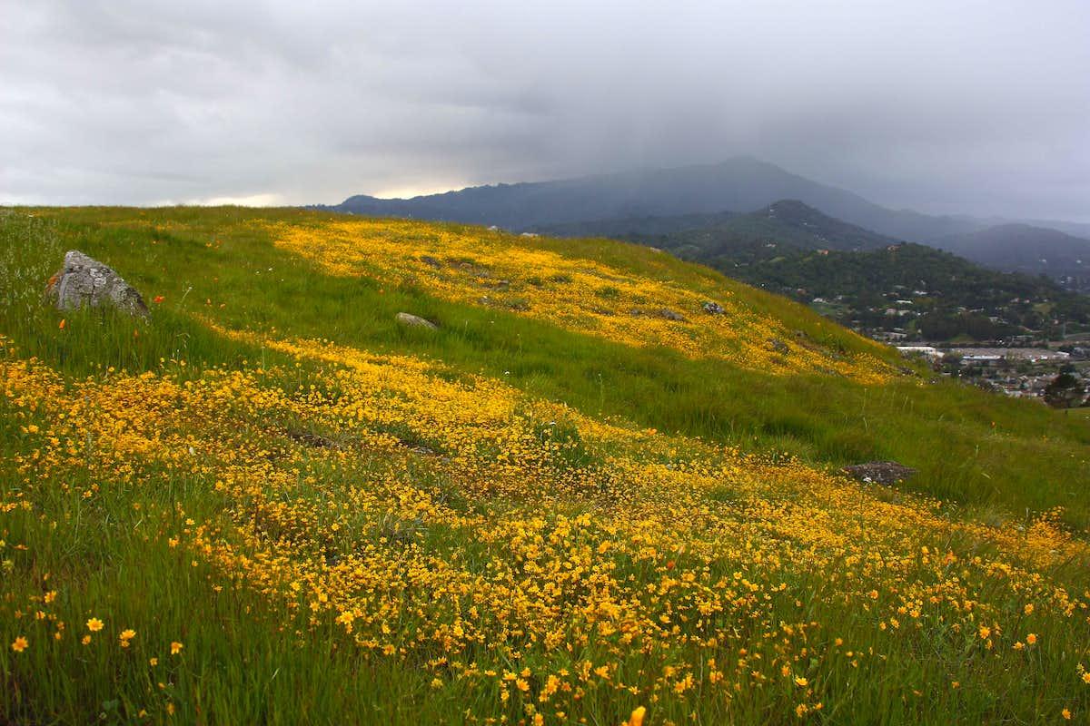Image Result For Hillside Mountain Home Plans