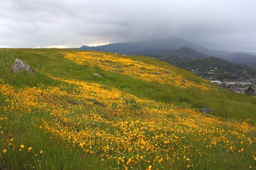 Spring hillside and approaching storm