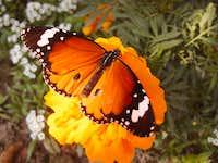 a butterfly in my lawn