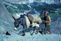 Porter and Donkey