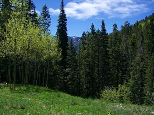 Meadow, Manzanita Canyon Trail
