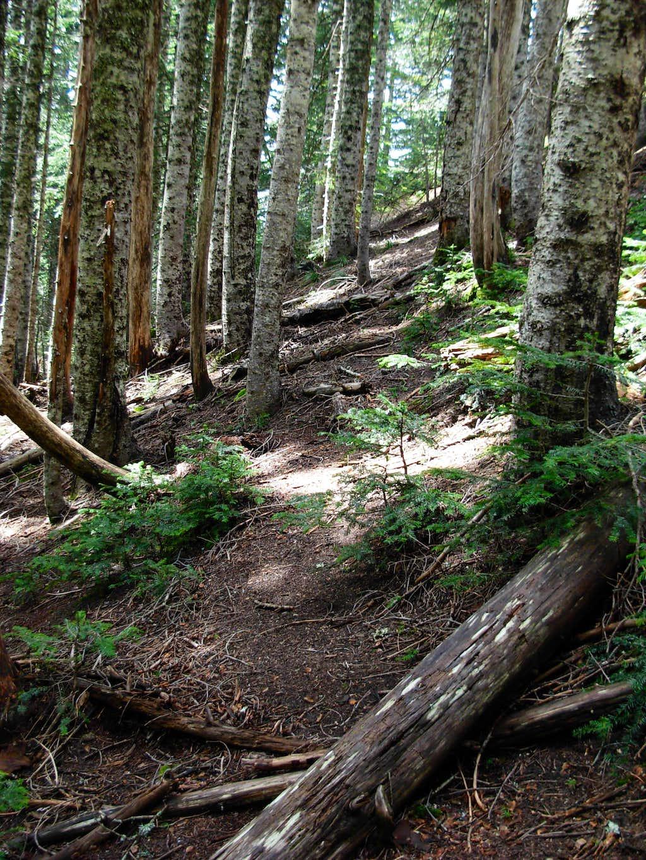 Boot Path For Sturgeon Rock