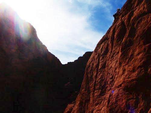 Ash high up on Cowlick Crag