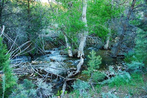 North Fork Cottonwood Creek