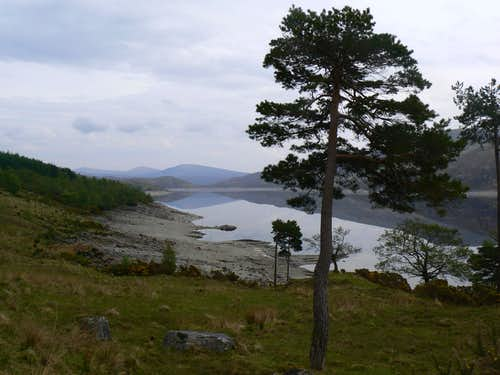 The Banks of Loch Quoich