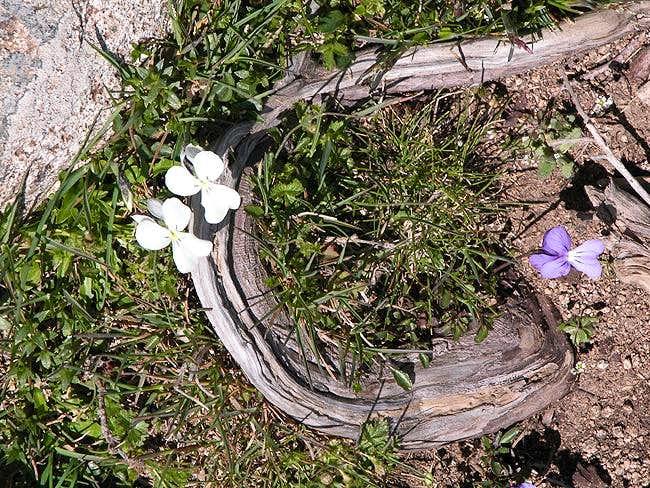 Punta La Marmora photo_id=99635