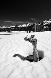 Tree Stump in the Snow, Horseshoe Lake