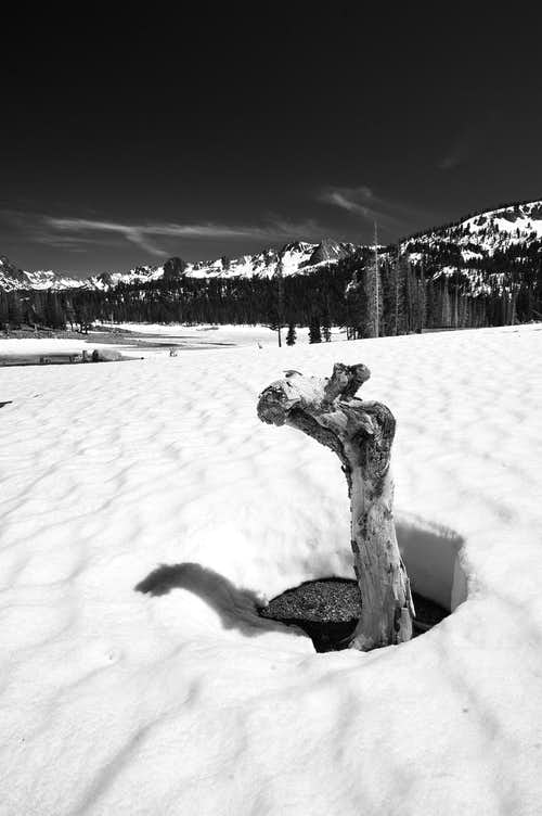 Tree Stump in the Snow, Horseshoe Lake