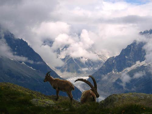 Ibex and the Mer de Glace