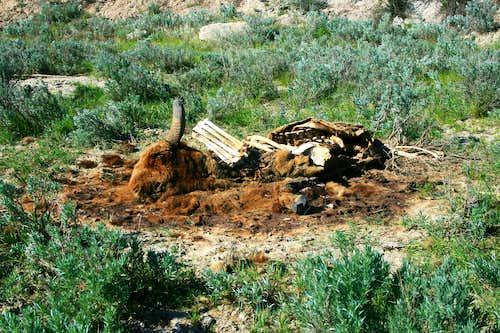 Bison Carcass, TRNP