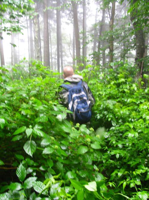 Hiking or Bushwhacking