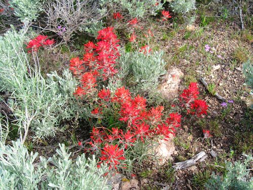 Springtime paintbrush on View BM