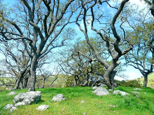 Oaks on Burdell Mtn.