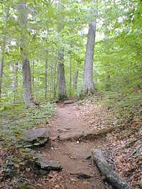 The trail up to Ampersand Mt