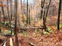 Fall in the largest virgin beech forest of Europe