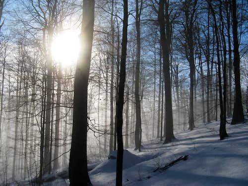 Beauty of misty virgin beech forest