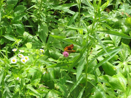20100613 1613a butterfly2