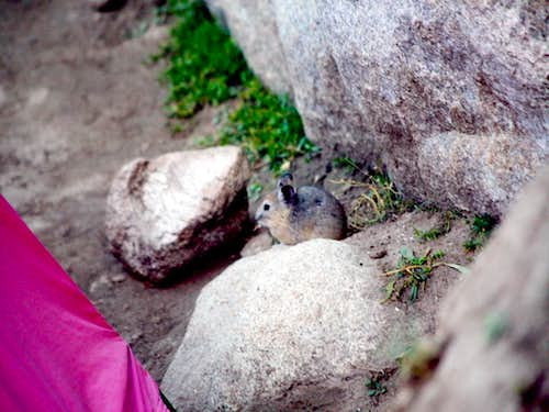 A mouse in the mountains