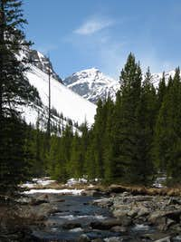 Whitetail from Lake Fork