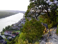 Cedar clinging to Mount Bonnell