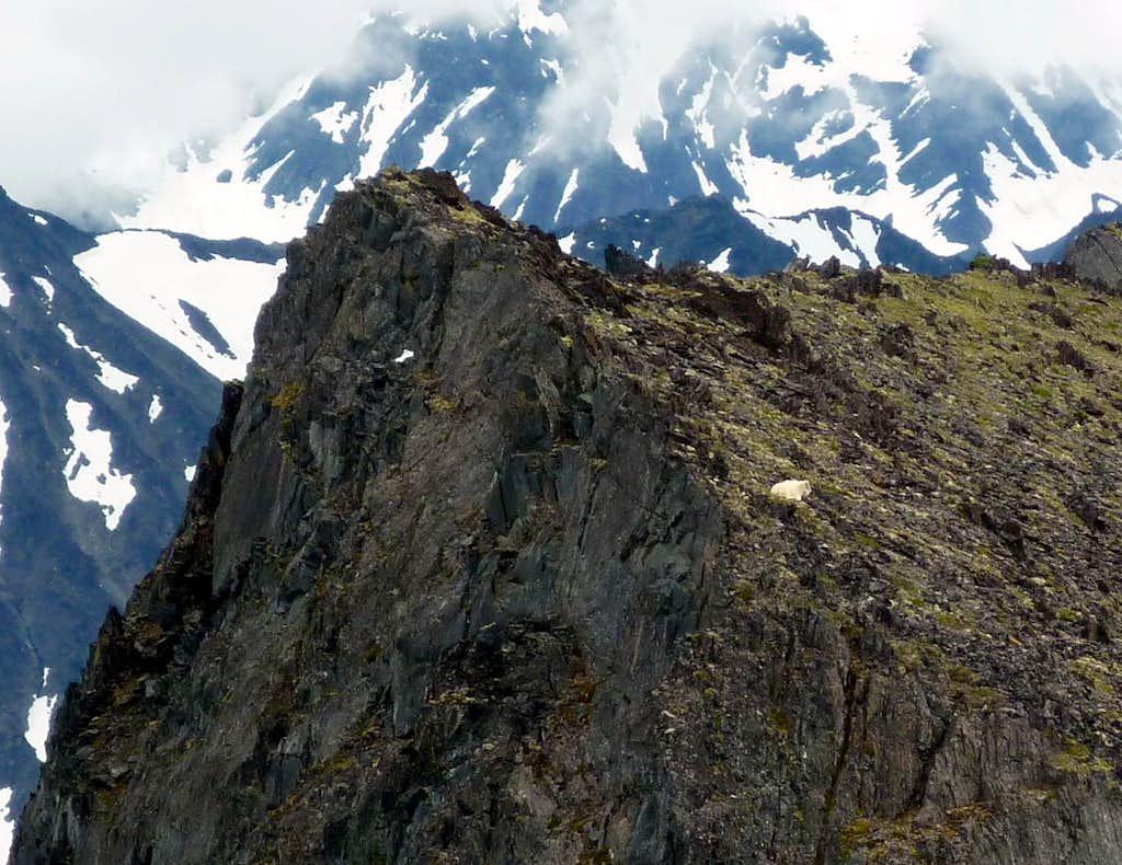 Nest Peak