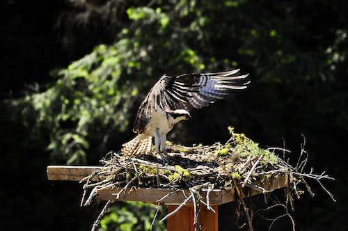 Osprey-Mores Creek