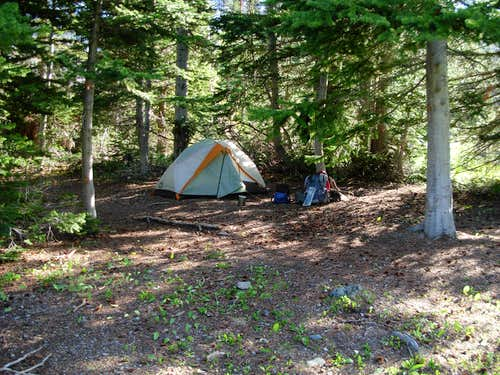 Campsite At Gardner Meadows