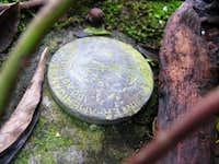 survey marker on the summit